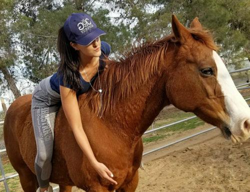 The Horsewoman, Zoë van Mourik