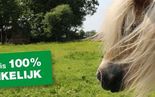 IFMHeemstede De Paardenkamp 100% giftafhankelijk