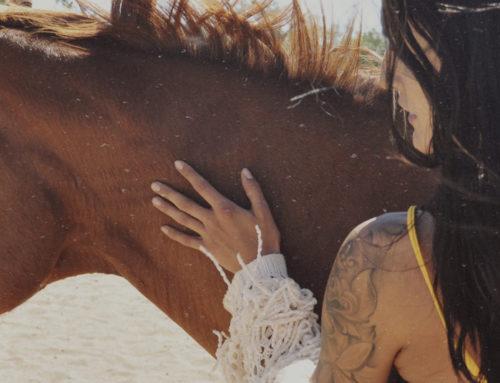 Horse Event 2019 Giveaway Paardenpakket