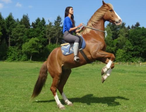 Bekendmaking winnaars van het Zoë & Henny Paardenpakket